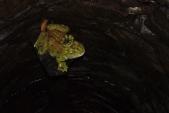 žabák ve studni