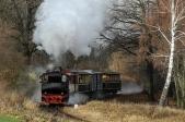 Mikulášský vlak vyjíždí zlesa podzastávkou Dívčí Hrad