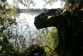 Stará vykotlaná vrba byla jistě svědkem mnohých let střídání ročních období, tření ryb, hnízdění ptáků, toužebného volání žab a určitě i dostaveníček zamilovaných