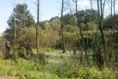 Cestou k Pavlovickému rybníku je útvar, který vypadá jako močál