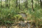 PR Džungle aneb cesta do pravěku
